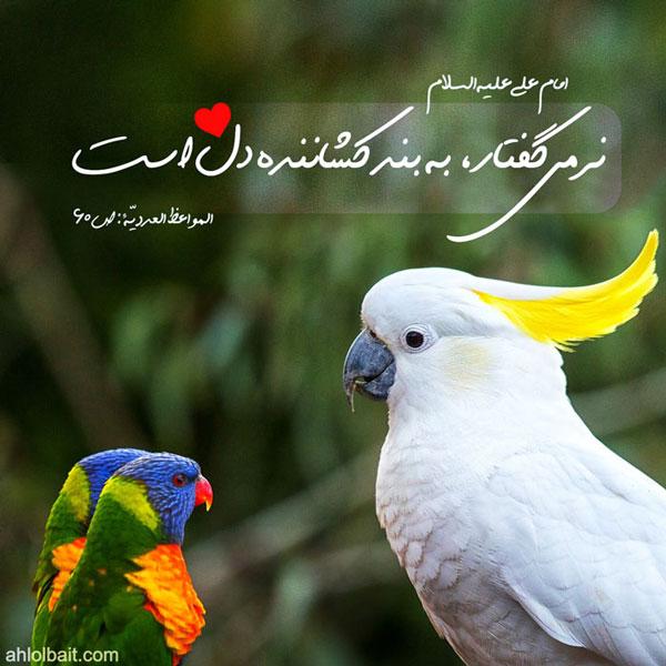 امام علی (علیه السلام): نرمى گفتار ، به بند کشاننده دل است
