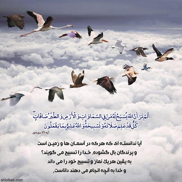 آیا ندانسته ای که هرکه در آسمان ها و زمین است و پرندگان بال گشوده، خدا را تسبیح می گویند؟ (سوره نور،آیه 42)
