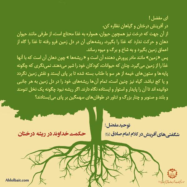 توحید مفضل: حکمت خداوند در ریشه درختان
